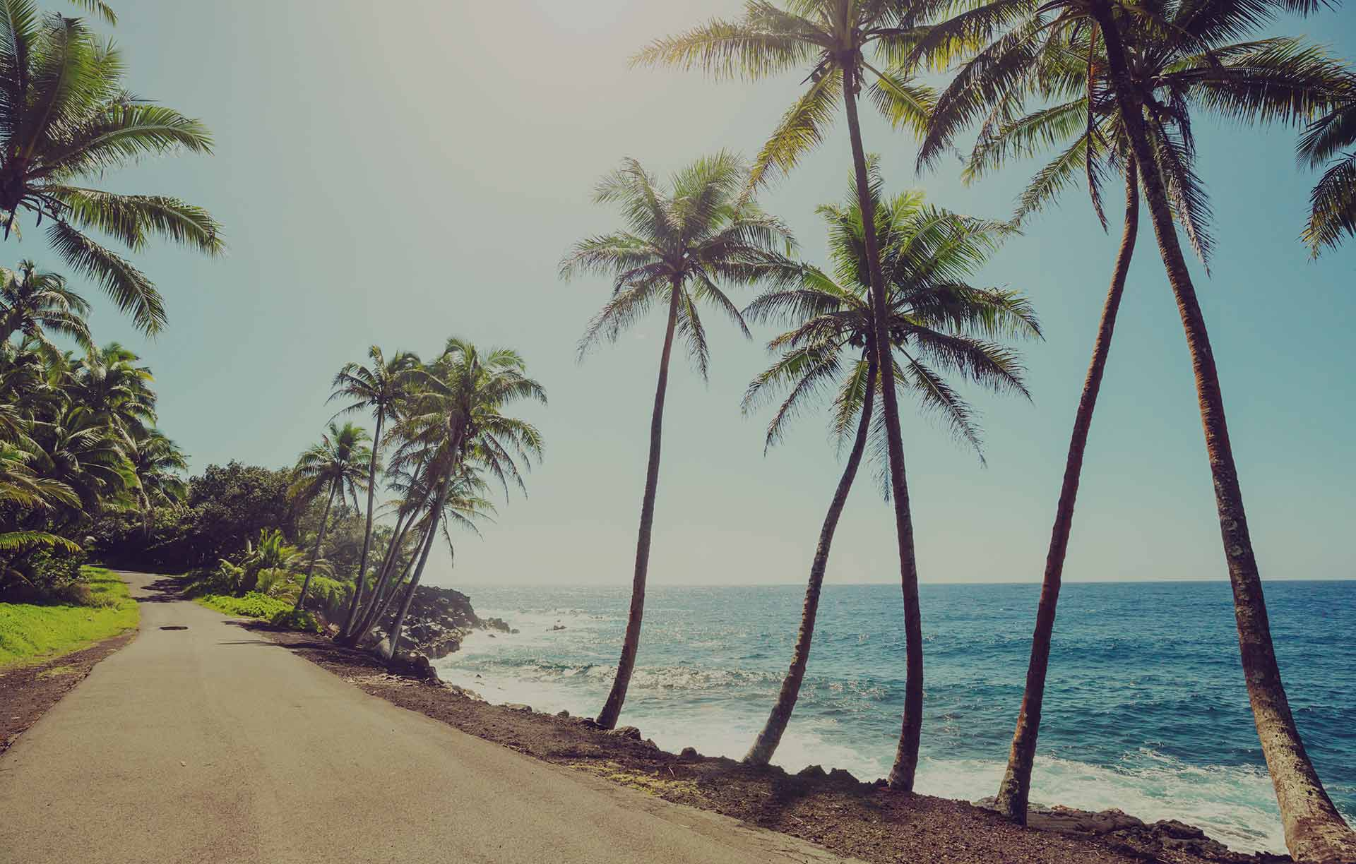 palm trees and beach